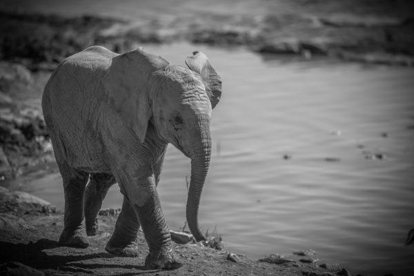 Photographie Jean-marie COSTA, éléphanteau, parc national d'Etosha, Namibie, voyage Afrique